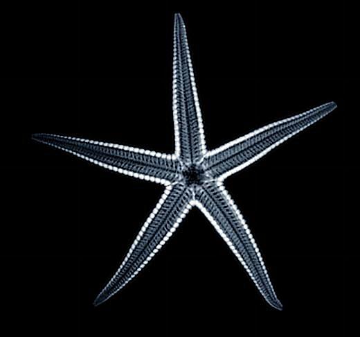 [Starfish Image]